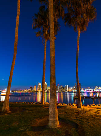 Palm trees in Coronado island with downtown San Diego in the background, California