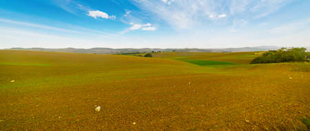 brown and green field under a blue sky in Tuscany, Italy Stock Photo