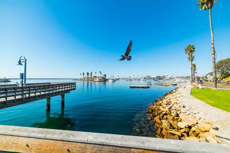 Seagull flying over Oceanside harbor, California