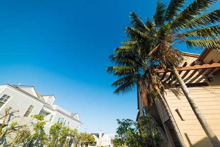 palm trees in Balboa island, California
