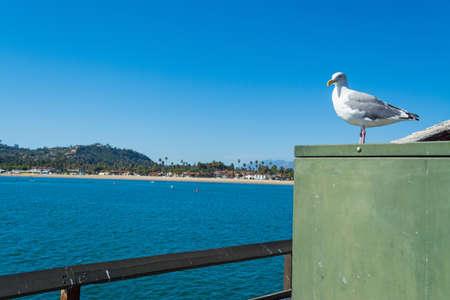 seagull standing on a metal box in Santa Barbara shore, California