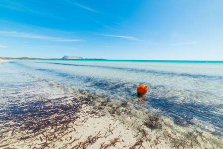 buoy: Orange buoy in Sardinia, Italy