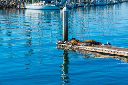 Sea lions in Oceanside, California