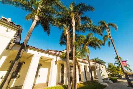 palm trees in Santa Barbara, California