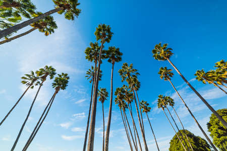 Palm trees in Mission bay, California