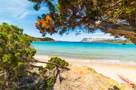 bather: Woman taking a sun bath in Sardinia, Italy Stock Photo
