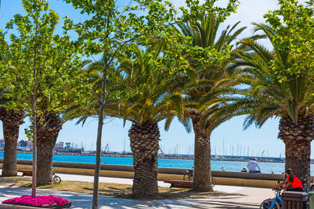 Palm trees in  sea front.