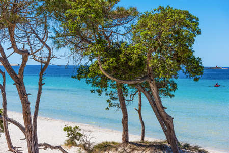 shorelines: Pine trees by the sea. Stock Photo