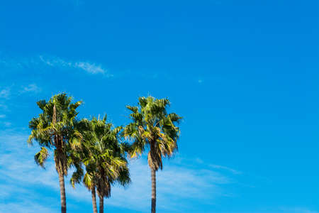 palm trees under a blue sky in California, USA Stock Photo