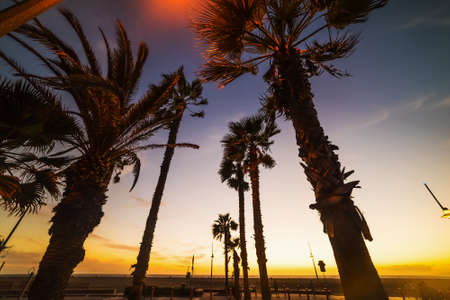 Palm trees in Santa Monica beach at sunset, California