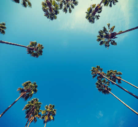 Palm trees seen from below, California