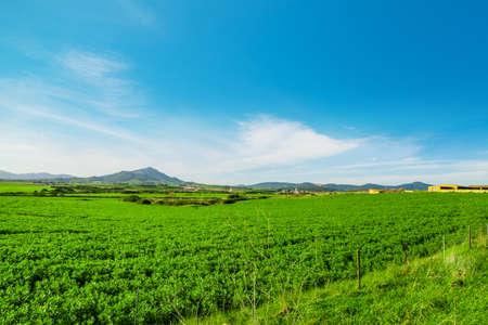 Green field and blue sky in springtime. Sardinia, Italy Stock Photo