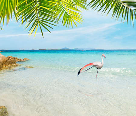 Flamingo in a tropical beach on a sunny day