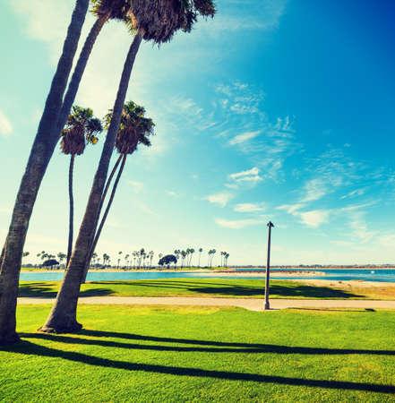Palm trees in Mission Bay, San Diego. Southern California, USA Фото со стока