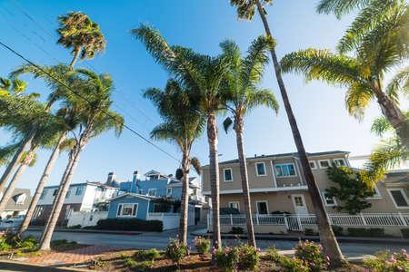Palm trees in Balboa island, Southern California