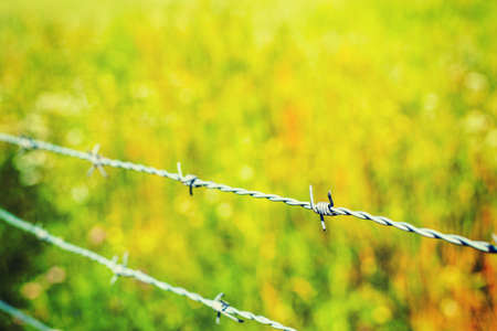 Close up of a barb wire with green grass on the background Archivio Fotografico