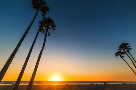 Tall palm trees in Newport Beach at sunset, Orange County. Southern California, USA