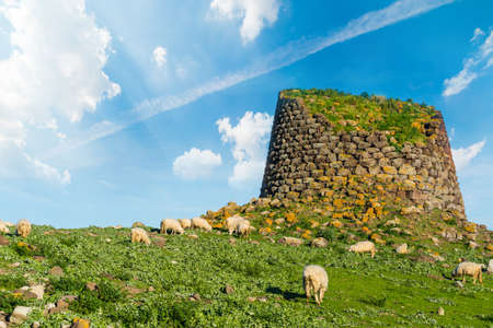 Herd of sheep by a nuraghe in Sardinia, Italy