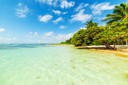 Palmiers et eau claire sur la plage de Bois Jolan en Guadeloupe, Antilles françaises. Petites Antilles, mer des Caraïbes Banque d'images