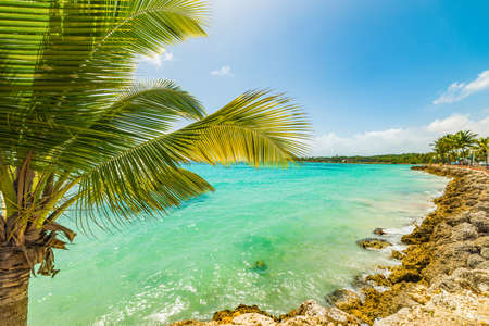 Palm tree in Sainte Anne beach in Guadeloupe island, French west indies. Lesser Antilles, Caribbean sea Reklamní fotografie - 121044945