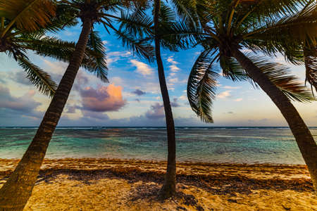 Bois Jolan beach in Guadeloupe island at sunset, French west indies. Lesser Antilles, Caribbean sea Banque d'images