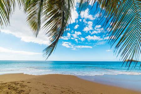 Palmtakken aan zee op het strand van La Perle in Guadeloupe, Frans West-Indië. Kleine Antillen, Caribische zee