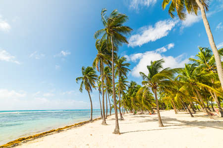 Palm trees and white sand in La Caravelle beach in Guadeloupe, French west indies. Lesser Antilles, Caribbean sea