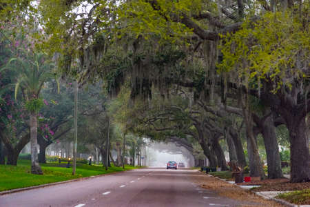 Spanish moss and oak trees in Venice. Florida, USA