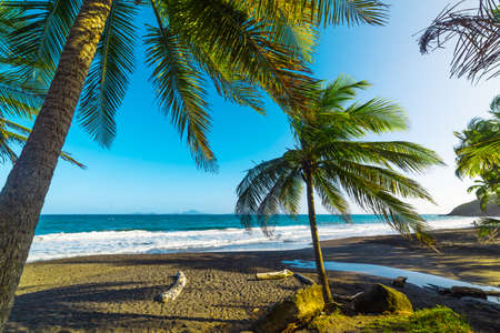 Dark sand and palm trees in Grande Anse beach in Guadeloupe, French west indies. Lesser Antilles, Caribbean sea Banque d'images