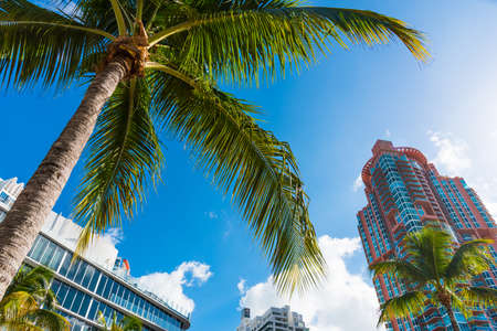 Palm trees and skyscrapers in world famous Miami Beach. Southern Florida, USA