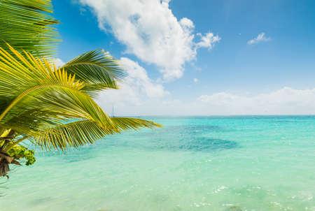 Eau turquoise sur la rive de Sainte Anne en Guadeloupe, mer des Caraïbes