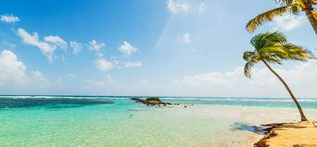 Palmiers au bord de la mer sur la plage de La Caravelle en Guadeloupe, Antilles françaises. Petites Antilles, mer des Caraïbes