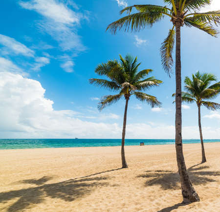 Palm trees on the sand in Fort Lauderdale beach. Southern Florida, USA