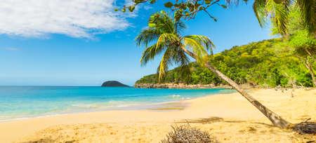 Palmiers sur le sable de la plage de La Perle. Guadeloupe, mer des Caraïbes