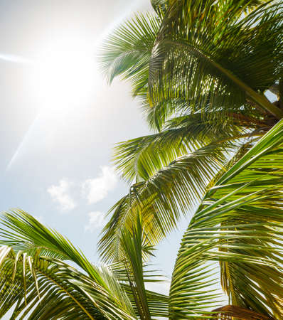 Palm trees and shining sun in the Caribbean Stock Photo