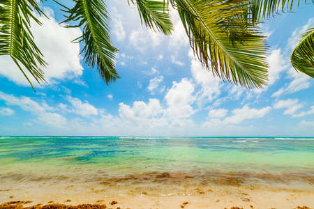 Clear water and palm trees in a tropical beach in Guadeloupe, French west indies. Lesser Antilles, Caribbean sea