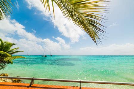 Palmiers et mer limpide en Guadeloupe, Antilles françaises. Petites Antilles, mer des Caraïbes