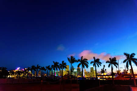 Palm trees silhouettes on a clear night in Miami. Southern Florida, USA Stok Fotoğraf