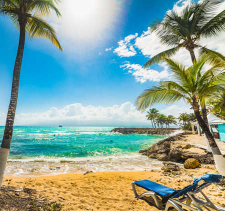 Beach chair and Coconut palm trees in Bas du Fort beach in Guadeloupe, French west indies. Lesser Antilles, Caribbean sea Imagens