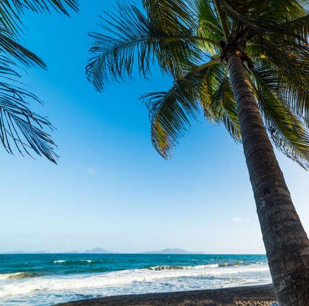 Palmen am Strand Grande Anse in Guadeloupe, Französisch-Westindien. Kleine Antillen, Karibisches Meer