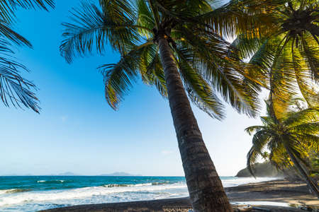 Palm trees in Grande Anse beach in Guadeloupe, French west indies. Lesser Antilles, Caribbean sea Stock Photo