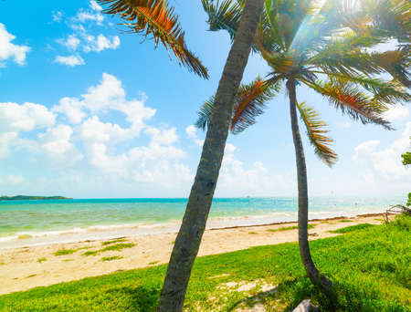 Palm trees in Pointe de la Saline beach in Guadeloupe, French west indies. Lesser Antilles, Caribbean sea