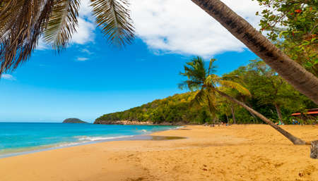 Coconut palm trees leaning over La Perle beach in Guadeloupe, French west indies. Lesser Antilles, Caribbean sea