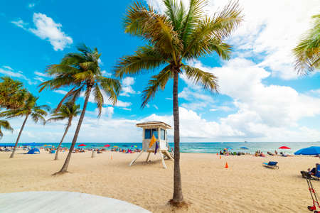 Golden sand and palm trees in Fort Lauderdale shore. Florida, USA