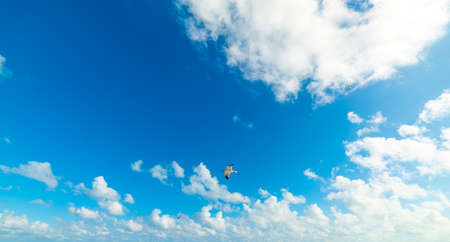 Seagulls flying in a blue sky with clouds Stock Photo