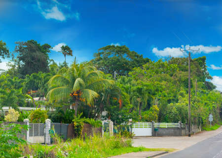 Luxuriant vegetation on the edge of a country road in Guadeloupe, Caribbean