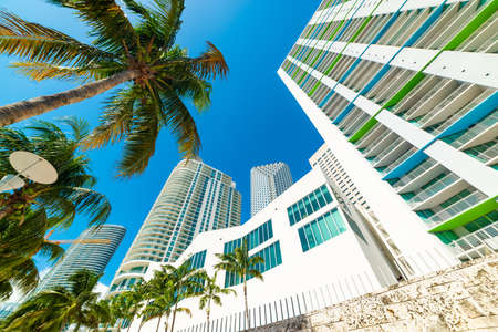 Skyscrapers and palm trees in beautiful downtown Miami, USA