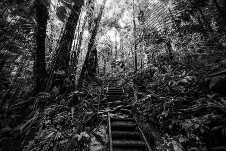 Staircase in Guadeloupe jungle. Lesser Antilles, Caribbean. Black and white effect Stok Fotoğraf