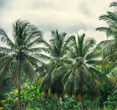 Palm trees under a cloudy sky in Guadeloupe, Caribbean Stock Photo