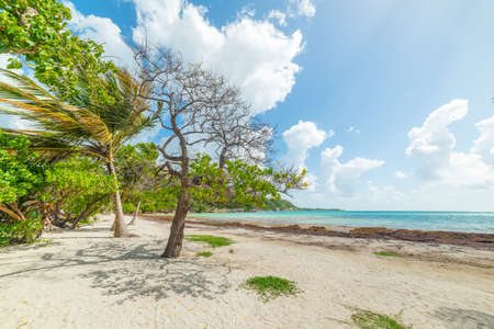 Pointe de la Saline beach in Guadeloupe, French west indies. Lesser Antilles, Caribbean sea